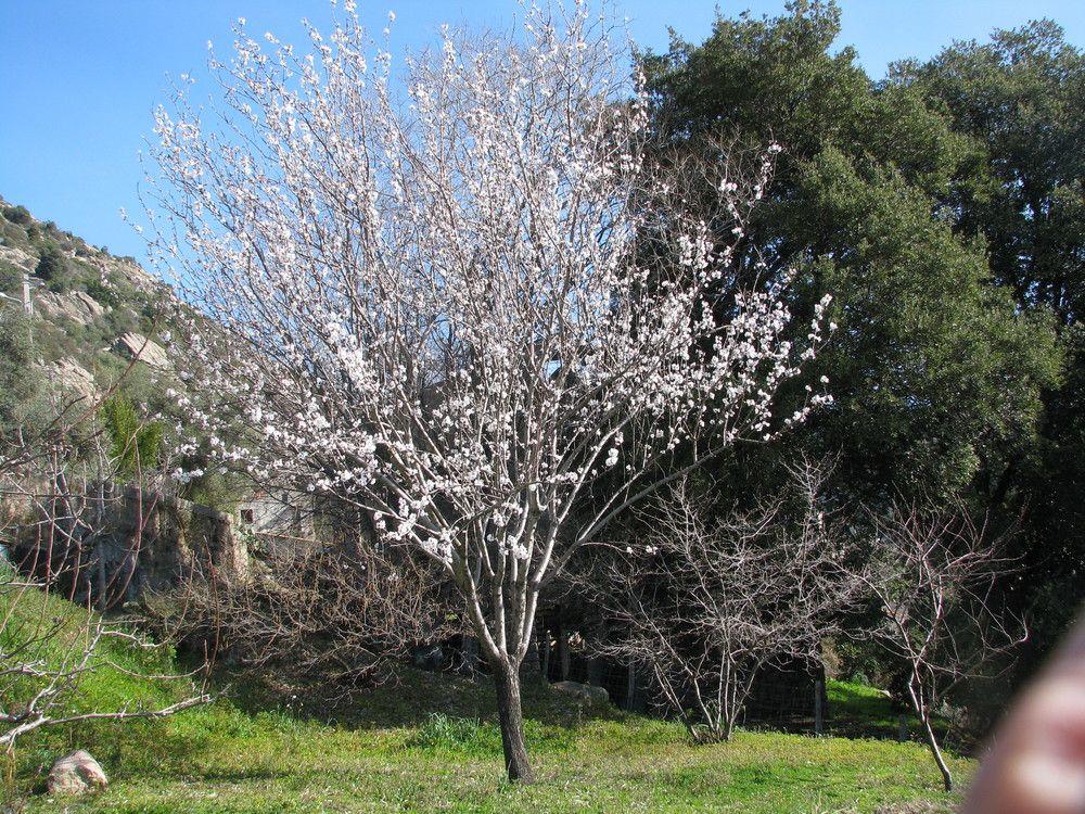 Plantes de balogna en corse - Tuer un arbre avec de l acide ...
