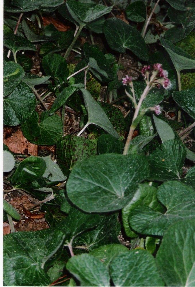 Plantes de balogna en corse for Plante en hiver
