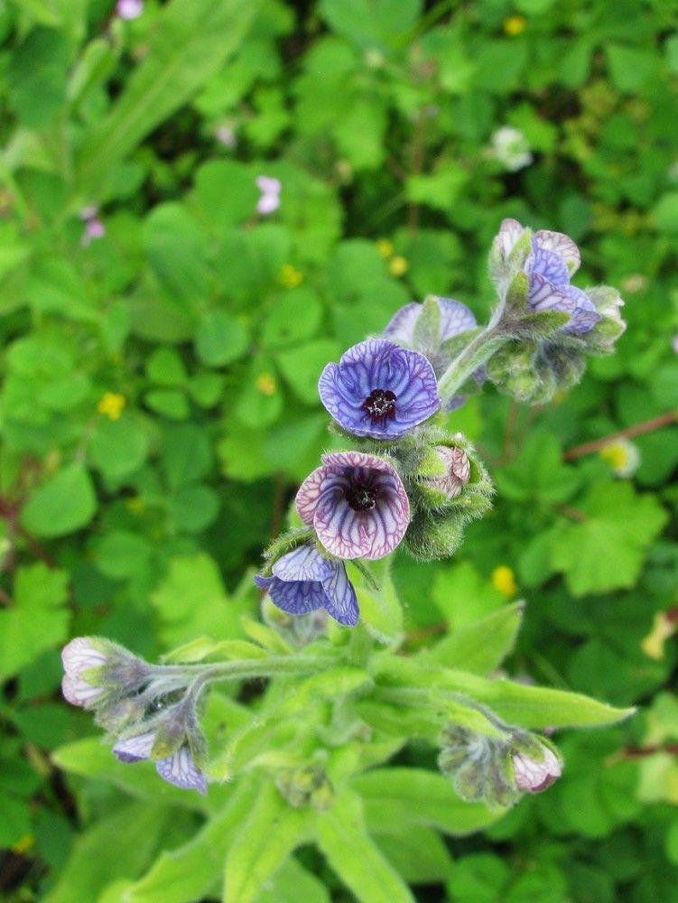 plantes de balogna en corse - mois de mai